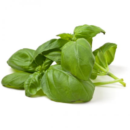 Basil Leave 20g Front
